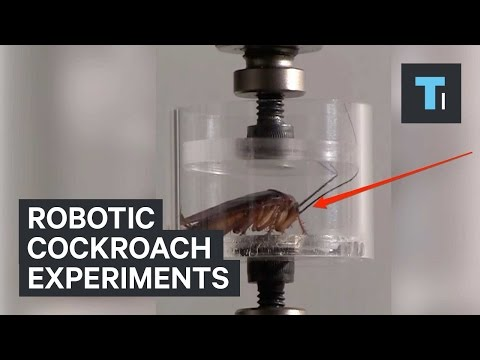 Robotic cockroach experiments