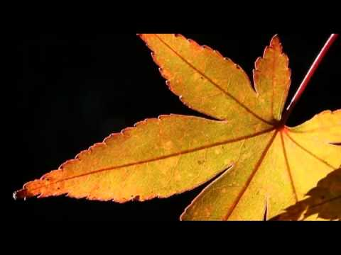 The Nature Photography Show, #5: Backlighting Plants