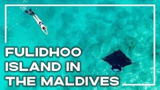 Scuba Diving Fulidhoo Island In The Maldives | Backpacker Banter