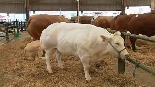 Forges-les-Eaux : les éleveurs bovins défendent leur filière