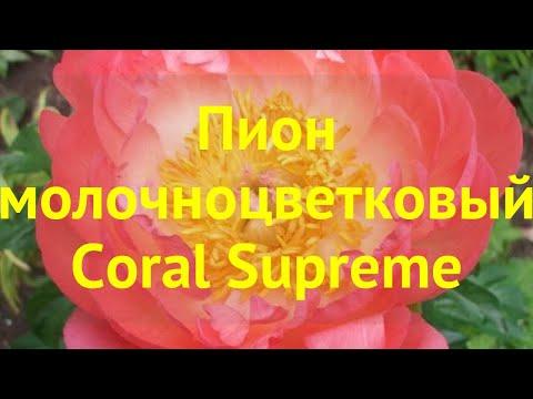 Пион молочноцветковый Корал Суприм. Краткий обзор, описание paeonia lactiflora Coral Supreme