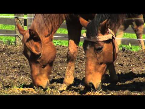 Thoroughbred Retirement Foundation: Putnam County Correctional Facility   The Weekly Special