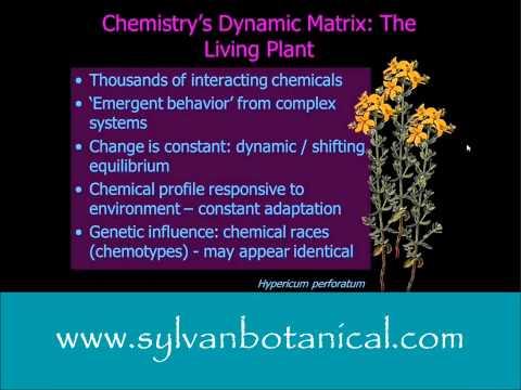 Phytochemistry Matrix of Plants