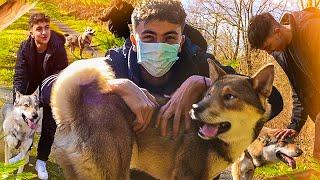 Je vais rencontrer mon futur chien (Enfin ses parents hihihiihihih) [Part.1]