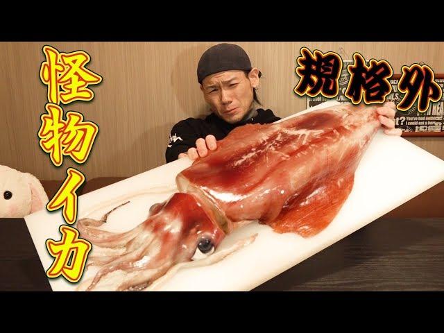 【大食い】規格外な巨大イカを丸ごと食す!~刺身&巨大イカリング~