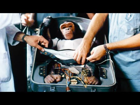 NASA's First Chimp