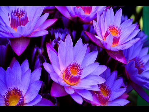 The most beautiful flowers on earth youtube for What is the most beautiful flower on earth