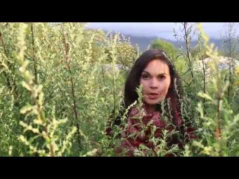 Artemisia vulgaris ~ Mugwort