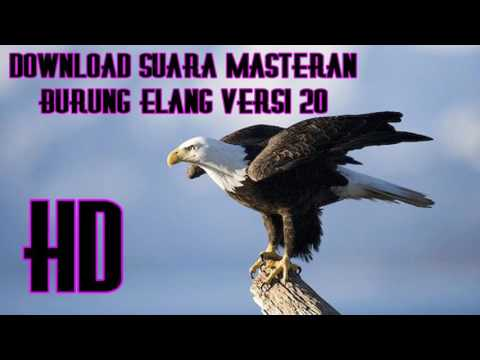 Download Suara Masteran Burung Elang Versi 20 Full HD