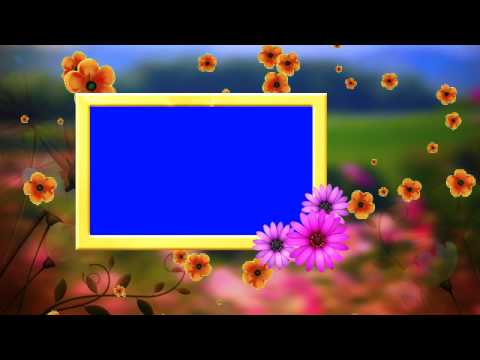 HD Wedding Frame Blue Background & Fallen Flowers Animated Video thumbnail