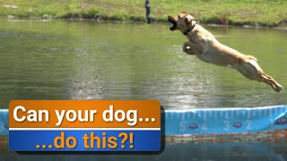 How to: Test an electric fence | Day trip to see Doggie dock diving