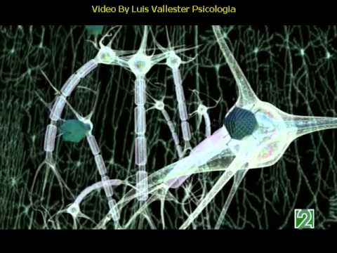 Documental La depresion tratamiento en psicologia clinica y psiquiatria By Luis Vallester