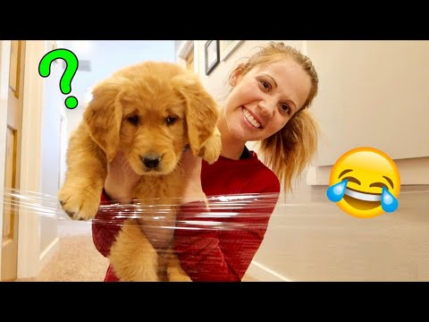 Summer vs Invisible Wall! Puppy Challenge
