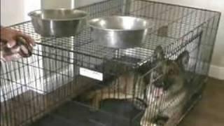 Basic Dog Obedience Training Myths & Tips : Food to Avoid Feeding A Dog
