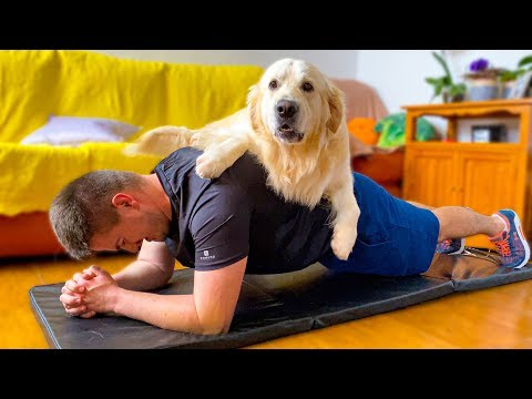 What does a workout look like when you have a golden retriever!