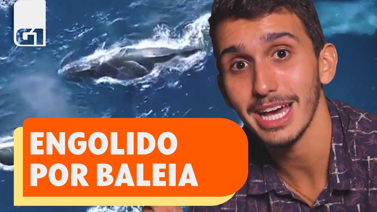 Especialista explica como homem sobreviveu 40 segundos dentro da boca de  uma baleia   Mundo   G1