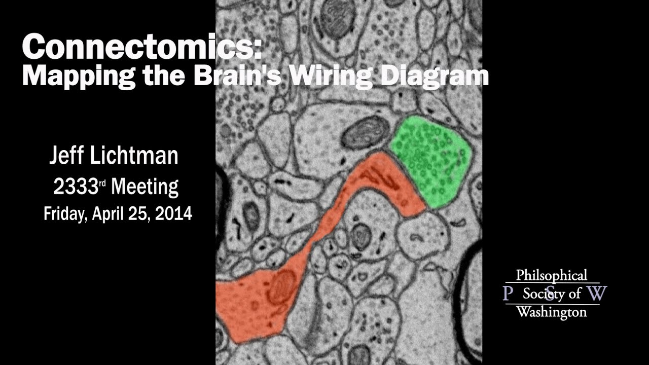 psw 2333 connectomics: mapping the brain's wiring diagram | jeff lichtman