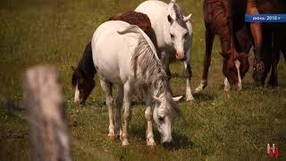 Ходят кони за рекою
