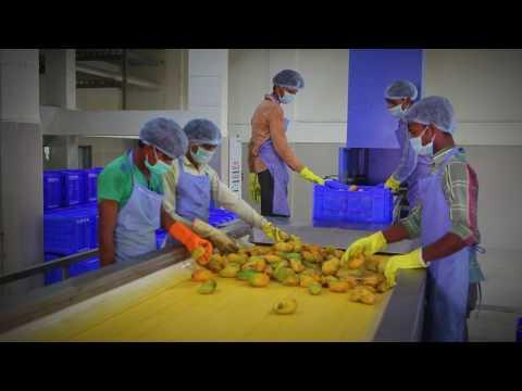 APMC surat Food Processing Plant