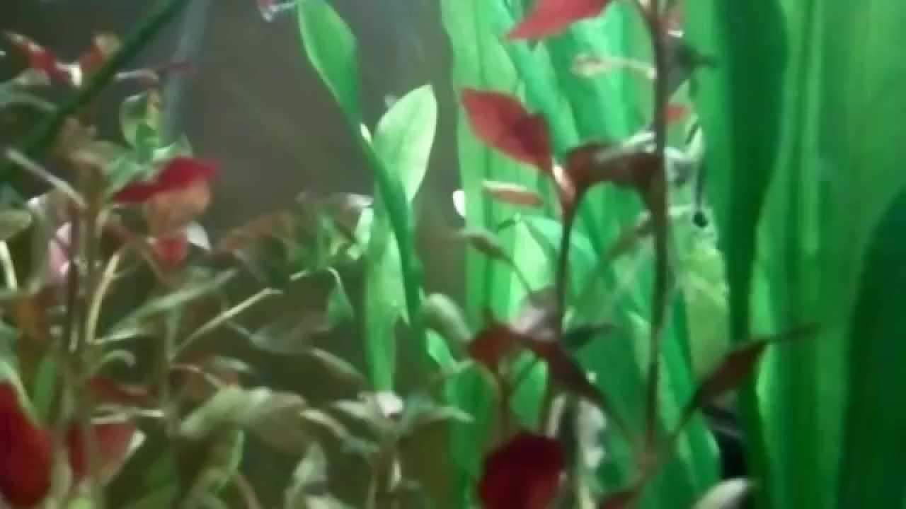 Tipos de plantas para un acuario y su cuidado youtube - Tipos de plantas y sus cuidados ...