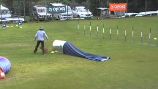 My norfolk terrier Bambam's 7th Dog Agility Trial(PJP1)
