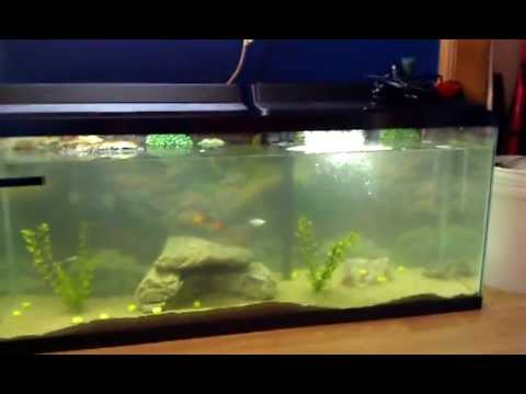 55 Gallon Red Eared Slider Turtle Tank YouTube