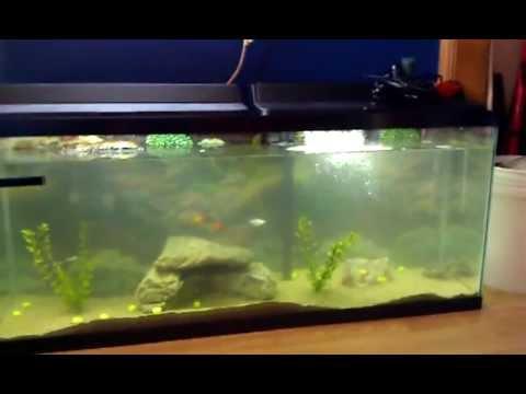 55 Gallon Red Eared Slider Turtle Tank YouTube