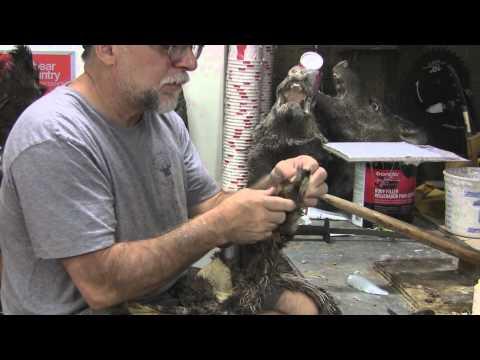 Testas Tuesday Tips Bob Cat Life size