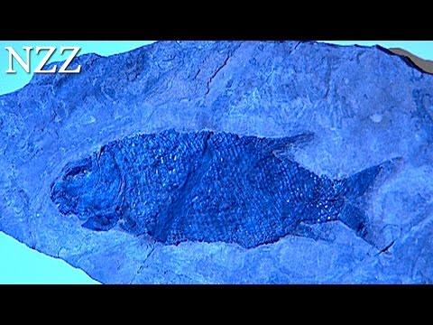So kam der Fisch auf den Berg - Dokumentation von NZZ Format (2005)