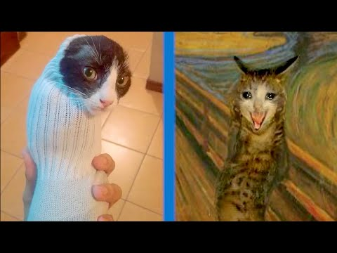 BEST CAT MEMES COMPILATION OF 2020 PART 32 (FUNNY CATS)