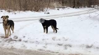 Поймать и помочь: волжане пытаются спасти собаку-космонавта