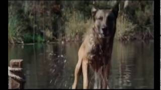 Защита от собак avi(Видео повествует,как защитить себя от нападения собак. http://www.kobra1.com.ua защите себя от бродячих собак и не..., 2015-10-05T13:36:18.000Z)