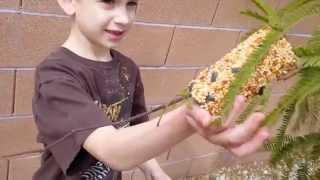 Peanut Butter Bird Feeders