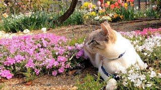 田舎家の庭をのんびりと楽しむ小太郎