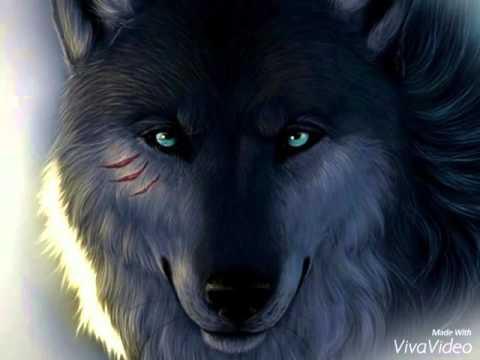 Волки фото 😀