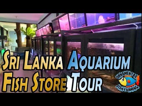 Aquarium  Sri Lanka Aquarium Fish Store Tour Aquarium Shop Fish Tanks