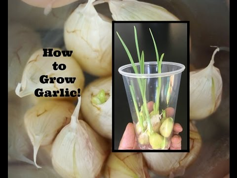 Greenhouse Gardening For Beginners Pots