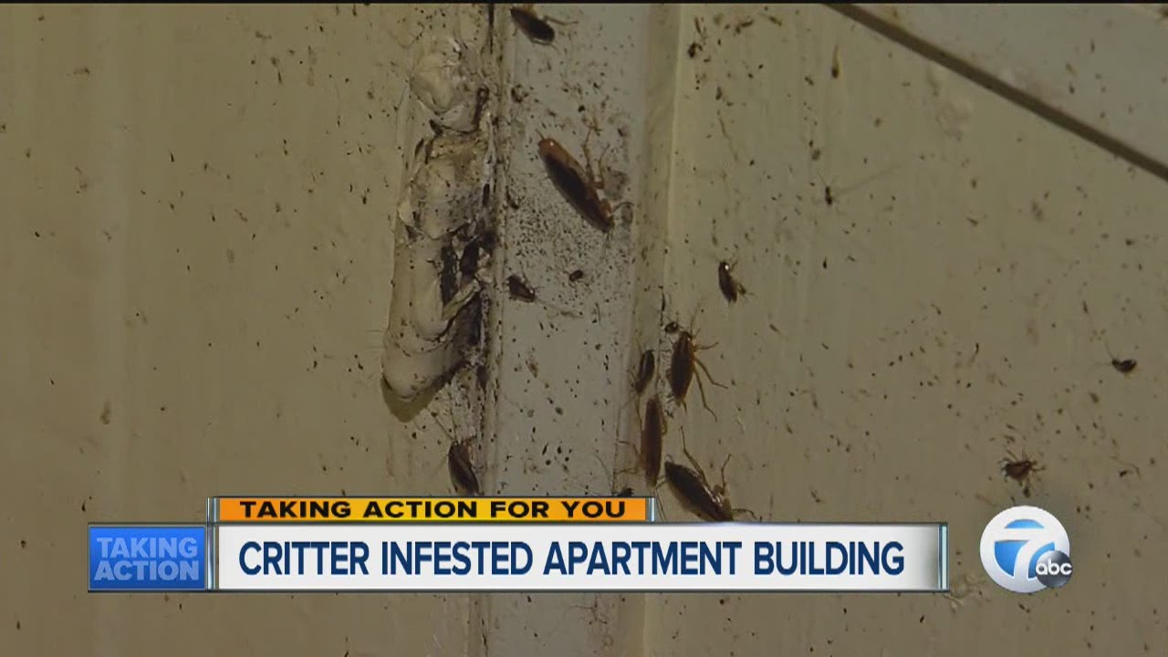 Bug Infested Apartment Building