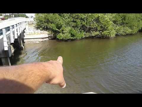 Secret shoreline fishing spot naples florida