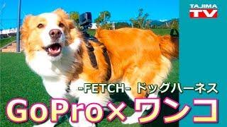 愛犬にGoProを「ウェアラブル」し、愛犬目線で世界を写すための専用ハー...