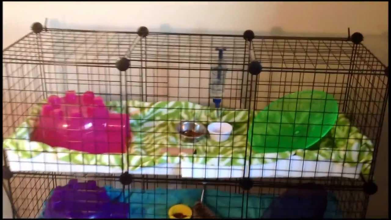 How To Build A Guinea Pig Home