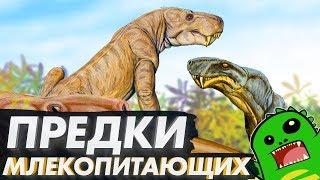 Предки млекопитающих   Синапсиды и пермский период   Горгонопсы, дейноцефалы и цинодонты