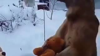 Funny Bear Playing With Teddy Bears