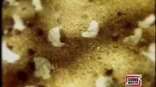 Supreme ishq tere ishq nachaya sufi song