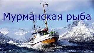 Как быстро и легко почистить и разделать треску [spasibozarybu.ru](Сегодня Вы узнаете как можно легко и быстро почистить и разделать треску в домашних условиях! За предостав..., 2015-12-03T09:03:32.000Z)