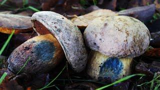 CampAesthetics 12.5 (Fungi & Bonus Footage)