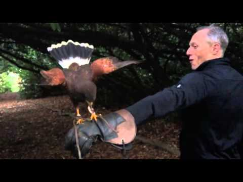 Slow Motion Falconry Action!