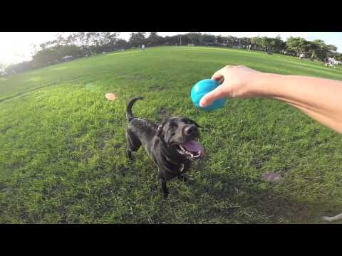 Wisecracking Talking Babble Ball Dog Toys