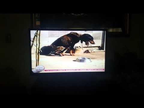 TV Patrol Northern Mindanao - Abused Dog