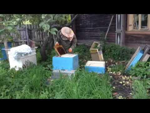 Вика пчеловод и дед
